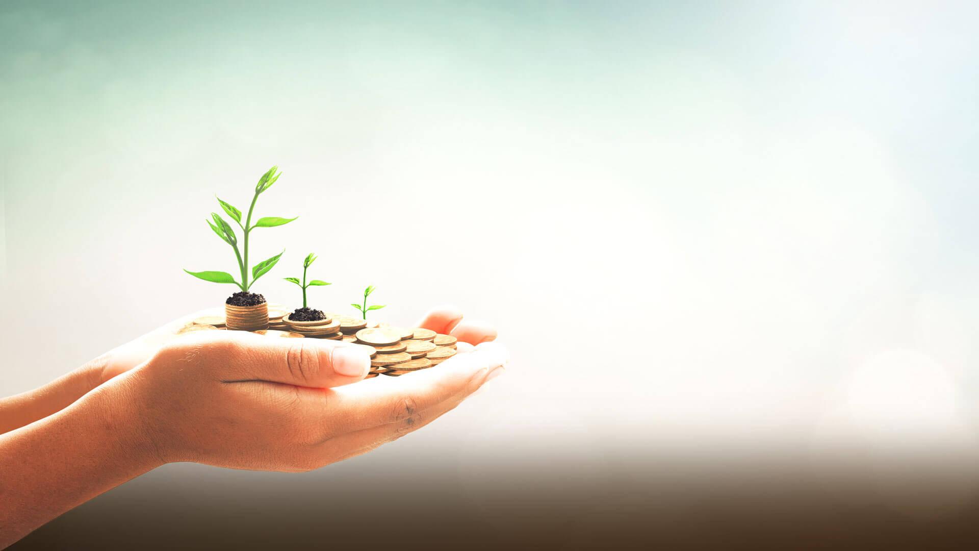 Fundcom Titelbild: Hand mit Geld in welchem Pflanzen wachsen